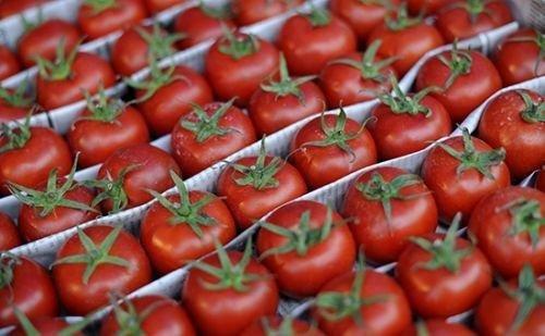 Bakıda pomidor 3 dəfə ucuzlaşdı - VİDEO