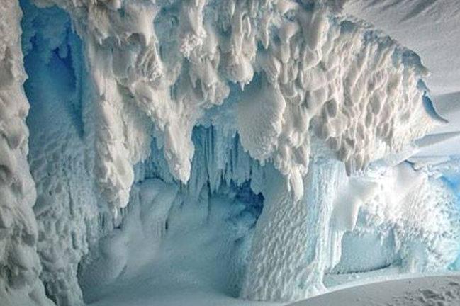 Antarktidada elmə məlum olmayan canlılar yaşayır — Alimlərdən yeni İDDİA