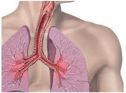 Yaşından asılı olmayaraq bronxial problemləri,faringit,asma problemi olanlara şad xəbər!