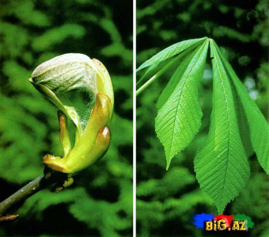 Təbii bitki yağlarının faydaları